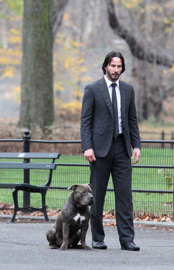 Sát thủ John Wick: Yêu chó điên cuồng trên phim còn sự thật ngoài đời ra sao? - Ảnh 4.