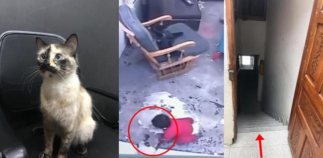 Trong khi mèo nhà bạn chỉ biết nằm ngửa đòi ăn, mèo nhà người ta đã cứu chủ nhân khỏi cái chết trong gang tấc - Ảnh 1.