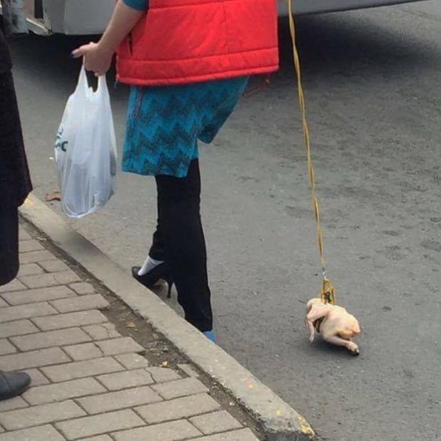 Mới mua được pet cưng từ kho đông lạnh ra nên cần khoe gấp.