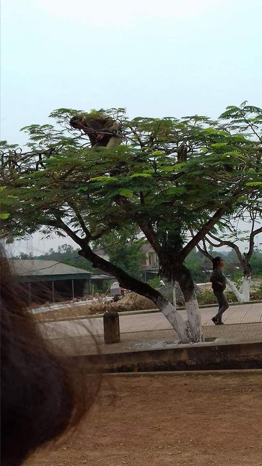 Chất chơi như thầy giáo trường người ta, leo hẳn lên cây để chụp ảnh cho học sinh, dân mạng hài hước ví von: Superman giữa đời thực - Ảnh 3.