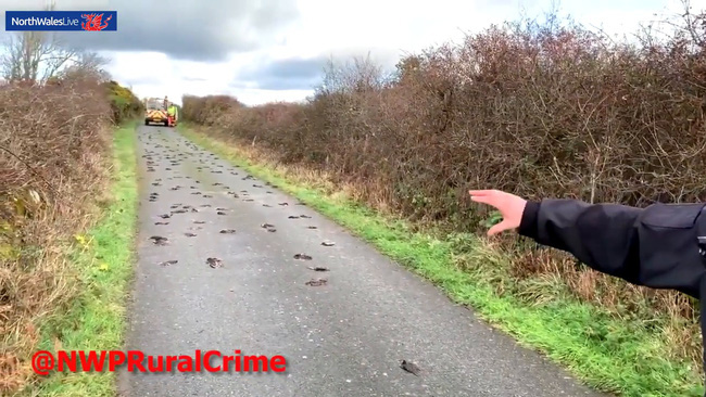 Anh: Hơn 300 con chim lòi ruột rơi xuống đất chết bất thường khiến tin đồn về ngày tận thế lan rộng - Ảnh 1.