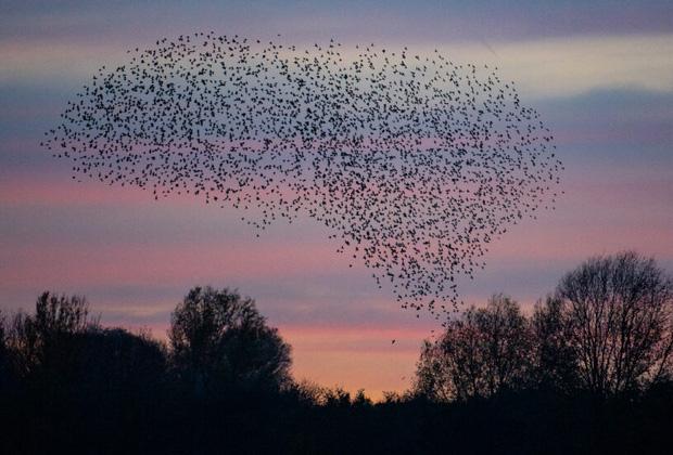 Hàng trăm con chim rơi xuống chết một cách bí ẩn, cảnh tượng hãi hùng như phim kinh dị