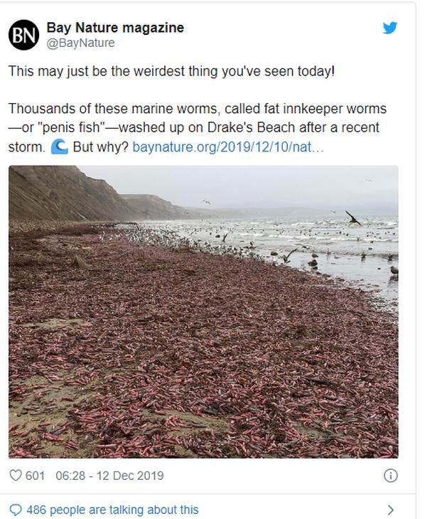 Hàng ngàn sinh vật có hình thù nhạy cảm, nằm lúc nhúc trên bãi biển California - Ảnh 1.