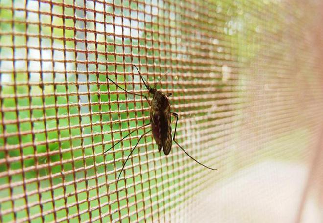 Các nhà khoa học phát triển thành công loại màn vừa an toàn với người, vừa tiêu diệt muỗi cực hiệu quả - Ảnh 1.