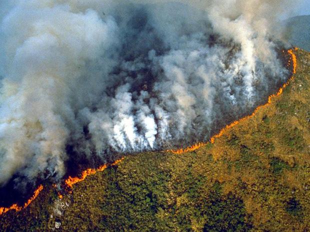 Toàn cảnh Trái đất năm 2019 thực sự rực cháy theo đúng nghĩa đen: Amazon cháy kỷ lục, nhưng đằng sau còn vấn đề hết sức đáng lo ngại - Ảnh 4.