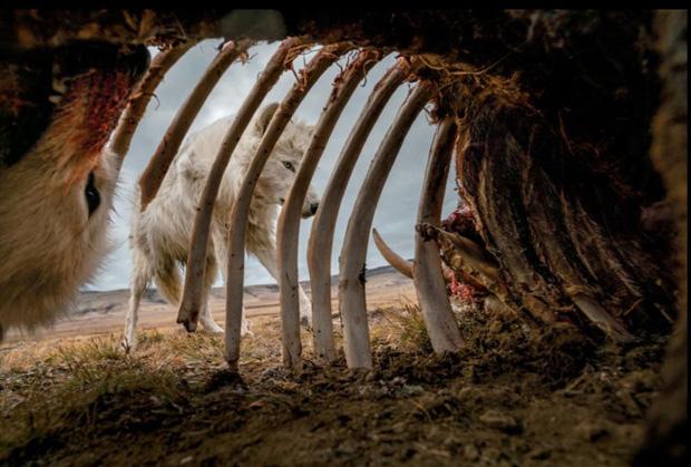 Những bức ảnh thế giới động vật đắt giá nhất năm 2019 - Ảnh 2.