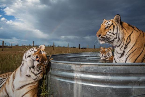 Những bức ảnh thế giới động vật đắt giá nhất năm 2019 - Ảnh 5.