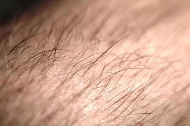 Tại sao con người phải cắt tóc còn các loài động vật khác thì không cần? - Ảnh 5.
