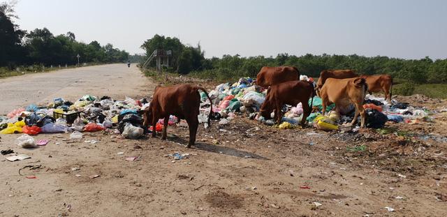 Kinh hoàng những bãi rác khổng lồ nằm ngay trên đê chống lũ - Ảnh 6.