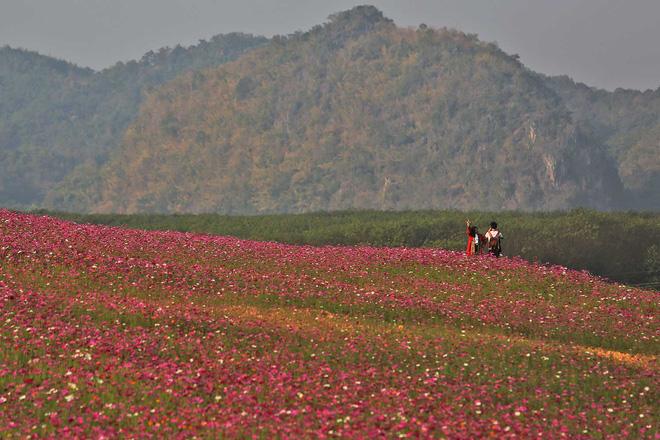 Khách du lịch cố tình dẫm đạp lên cánh đồng hoa xinh đẹp để sống ảo bất chấp biển cấm khắp nơi khiến dân mạng Thái Lan phẫn nộ - Ảnh 2.