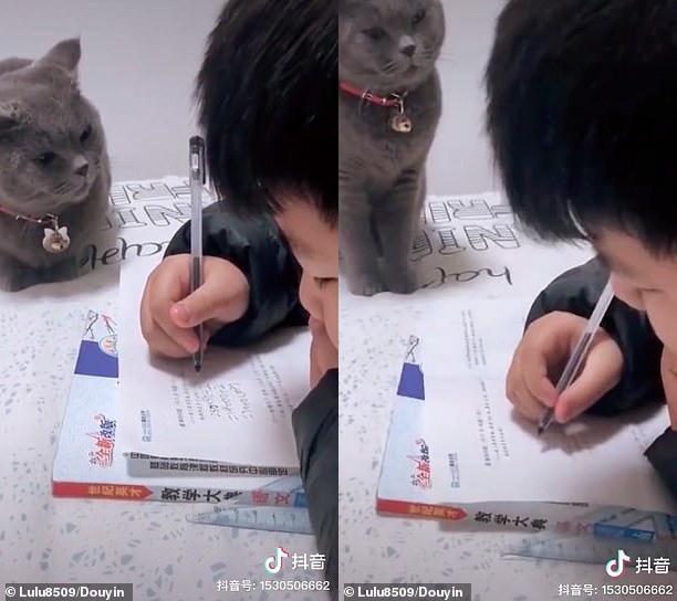 Boss mèo nổi tiếng Internet vì thường xuyên giám sát cậu chủ nhỏ làm bài tập, không tập trung là bị lườm cháy mặt - Ảnh 2.