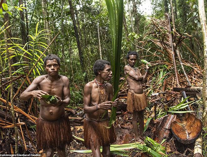 Hình ảnh hiếm hoi về người Korowai - bộ lạc mà thế giới suýt không biết đang tồn tại - Ảnh 1.