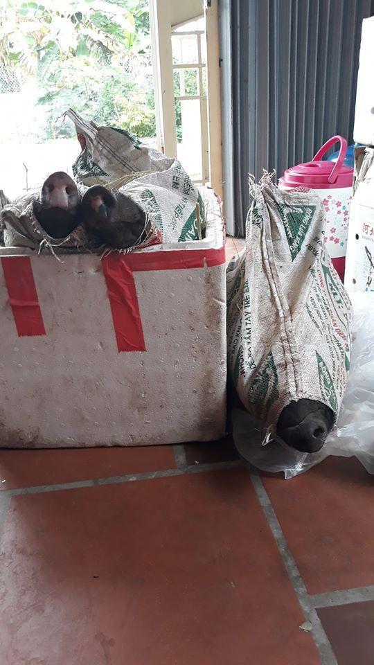 37 ngày nữa mới Tết, lo sợ thực phẩm bẩn, bà nội trợ Việt đã nháo nhác đặt lợn rừng ăn Tết - Ảnh 9.