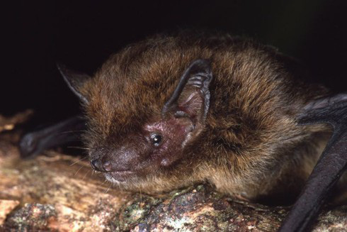 Đây là danh sách toàn bộ 160 loài sinh vật đã tuyệt chủng trong thập niên 2010 - Ảnh 4.