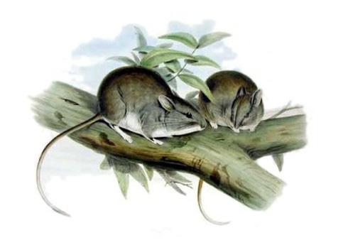 Đây là danh sách toàn bộ 160 loài sinh vật đã tuyệt chủng trong thập niên 2010 - Ảnh 7.