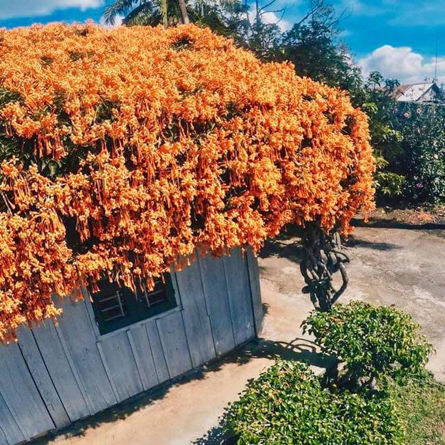 """Xôn xao thông tin giàn hoa xác pháo phủ khắp ngôi nhà nổi tiếng ở Bảo Lộc bị """"vác"""" về Hà Nội với giá 16 triệu đồng!? - Ảnh 1."""