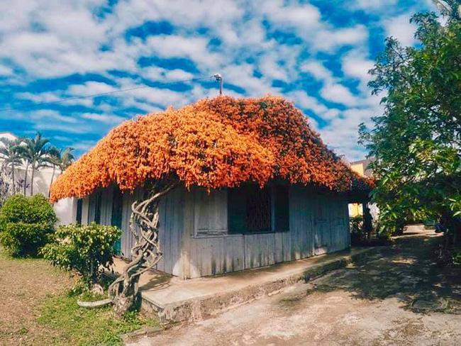 """Xôn xao thông tin giàn hoa xác pháo phủ khắp ngôi nhà nổi tiếng ở Bảo Lộc bị """"vác"""" về Hà Nội với giá 16 triệu đồng!? - Ảnh 2."""