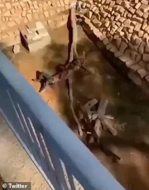Nam thanh niên thoát chết thần kỳ sau khi ngã xuống chuồng hổ - Ảnh 2.