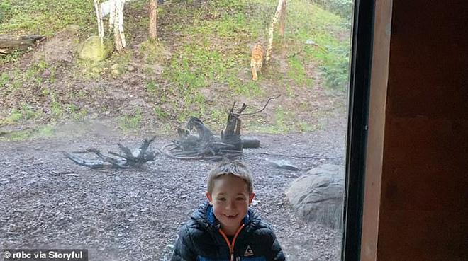 Đứng tim trước khoảnh khắc con hổ ở sở thú bất ngờ lao tới cố gắng vồ lấy cậu bé như đang săn mồi - Ảnh 2.