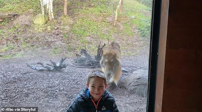 Đứng tim trước khoảnh khắc con hổ ở sở thú bất ngờ lao tới cố gắng vồ lấy cậu bé như đang săn mồi - Ảnh 3.