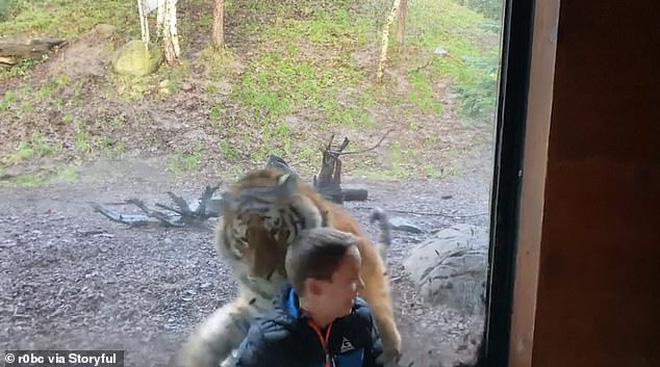 Đứng tim trước khoảnh khắc con hổ ở sở thú bất ngờ lao tới cố gắng vồ lấy cậu bé như đang săn mồi - Ảnh 4.