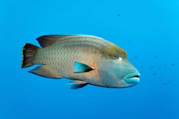 """Những sinh vật """"độc nhất vô nhị"""" dưới đáy đại dương - Ảnh 11."""