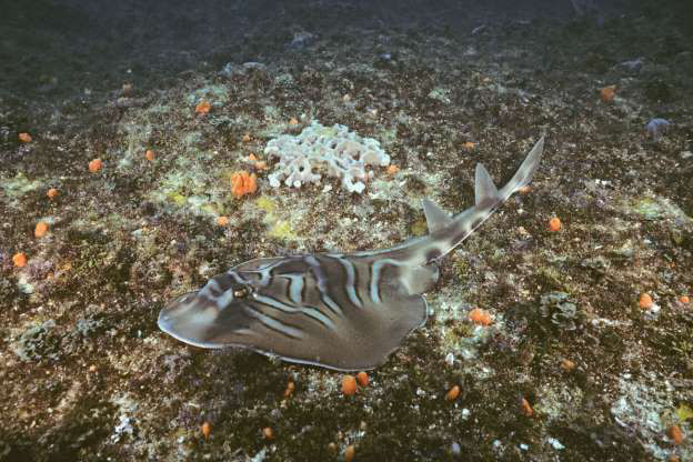 """Những sinh vật """"độc nhất vô nhị"""" dưới đáy đại dương - Ảnh 13."""