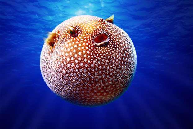 """Những sinh vật """"độc nhất vô nhị"""" dưới đáy đại dương - Ảnh 15."""