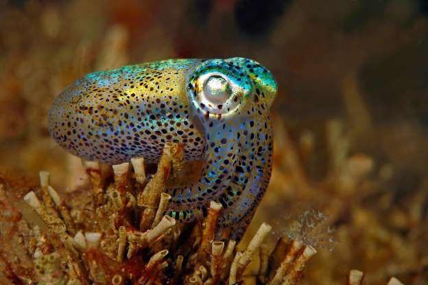 """Những sinh vật """"độc nhất vô nhị"""" dưới đáy đại dương - Ảnh 3."""