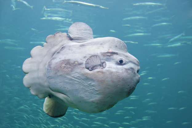 """Những sinh vật """"độc nhất vô nhị"""" dưới đáy đại dương - Ảnh 7."""