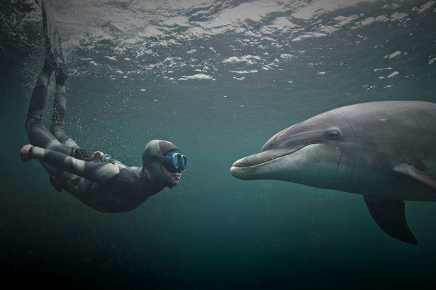 NASA thực hiện thí nghiệm với cá heo là để nói chuyện với người ngoài hành tinh? - Ảnh 1.