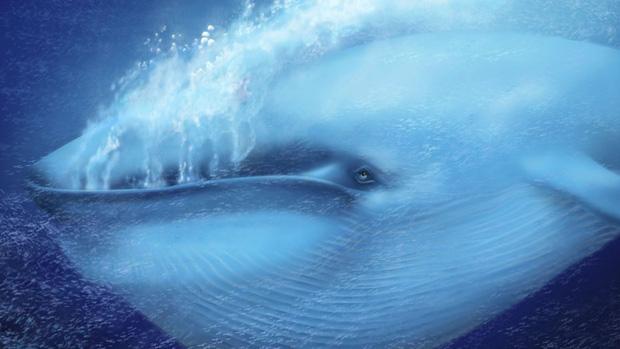 Lần đầu tiên trong lịch sử khoa học đo được nhịp tim của loài vật lớn nhất hành tinh - câu hỏi là làm như thế nào? - Ảnh 3.