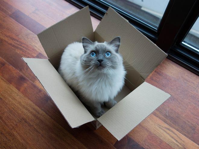 Khoa học giải thích: Tại sao lũ mèo thích hộp? - Ảnh 1.