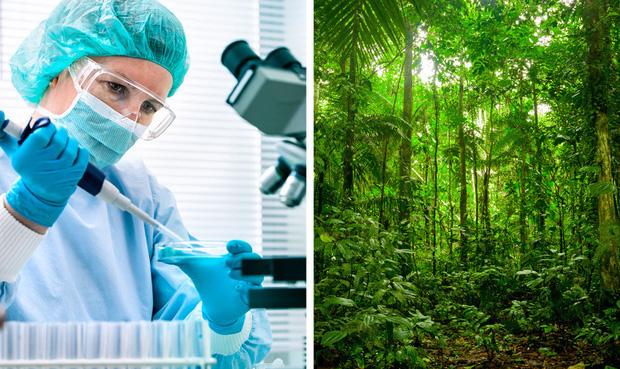 Thế giới sẽ đối mặt với hàng loạt thảm họa nếu rừng Amazon cháy rụi: 90% bệnh tật không có thuốc chữa, 50% loài sinh vật bị tiêu diệt - Ảnh 2.