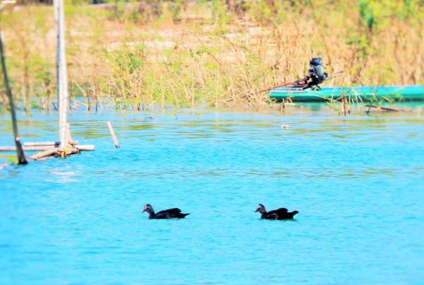 Cận cảnh cuộc mưu sinh của dân làng chài trong lòng hồ thủy điện Sê San - Ảnh 11.