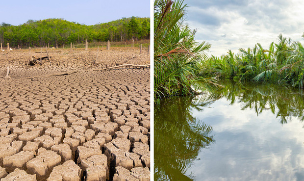 Thế giới sẽ đối mặt với hàng loạt thảm họa nếu rừng Amazon cháy rụi: 90% bệnh tật không có thuốc chữa, 50% loài sinh vật bị tiêu diệt - Ảnh 4.