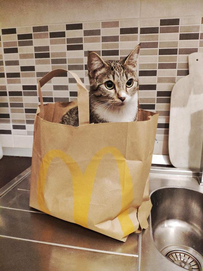 Khoa học giải thích: Tại sao lũ mèo thích hộp? - Ảnh 5.