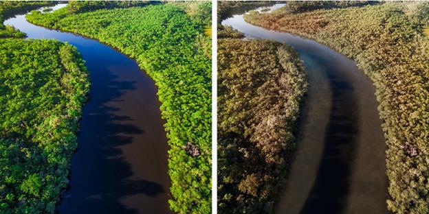 Thế giới sẽ đối mặt với hàng loạt thảm họa nếu rừng Amazon cháy rụi: 90% bệnh tật không có thuốc chữa, 50% loài sinh vật bị tiêu diệt - Ảnh 9.