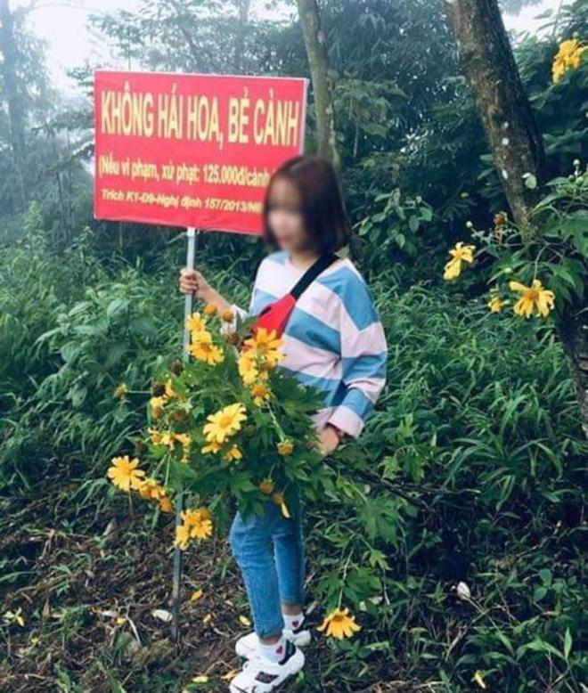 Cô gái nằm đè bẹp hàng loạt cây hoa cúc họa mi, hình ảnh khiến dân mạng bức xúc - Ảnh 4.