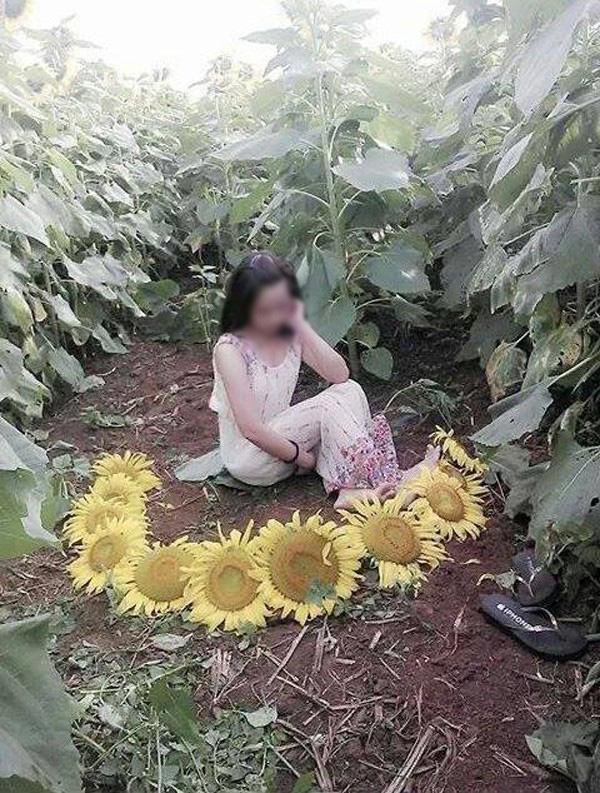 Cô gái nằm đè bẹp hàng loạt cây hoa cúc họa mi, hình ảnh khiến dân mạng bức xúc - Ảnh 5.