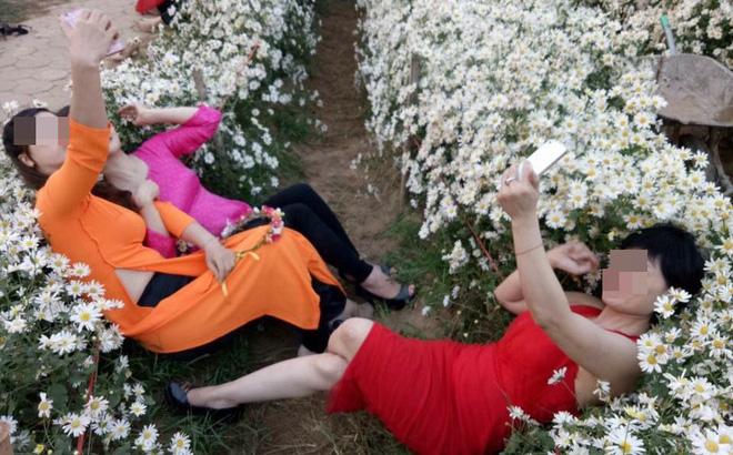 Cô gái nằm đè bẹp hàng loạt cây hoa cúc họa mi, hình ảnh khiến dân mạng bức xúc - Ảnh 3.