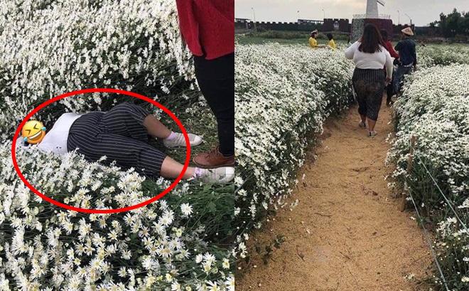Cô gái nằm đè bẹp hàng loạt cây hoa cúc họa mi, hình ảnh khiến dân mạng bức xúc