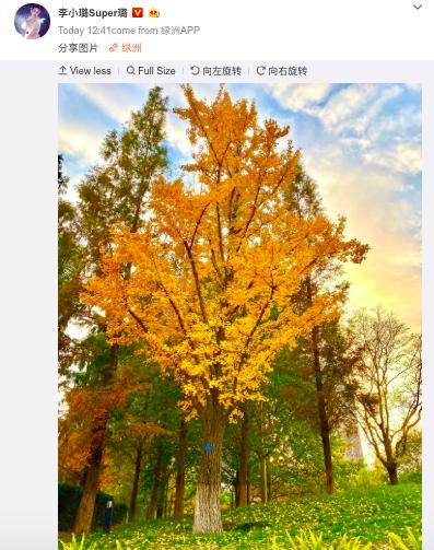 1 tháng sau scandal lộ 3 clip nóng, bài đăng đầu tiên của Lý Tiểu Lộ trên Weibo khiến netizen xôn xao đồn đoán  - Ảnh 2.