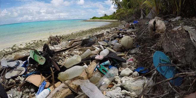 Thảm họa sinh thái: Nửa triệu sinh vật đã phải bỏ xác tại hòn đảo đang ngập trong hàng trăm triệu mảnh rác nhựa - Ảnh 2.