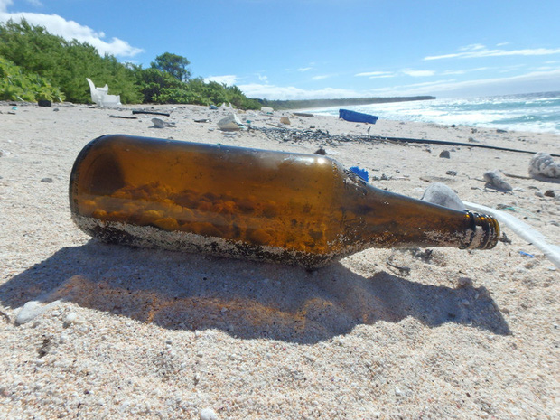 Thảm họa sinh thái: Nửa triệu sinh vật đã phải bỏ xác tại hòn đảo đang ngập trong hàng trăm triệu mảnh rác nhựa - Ảnh 6.