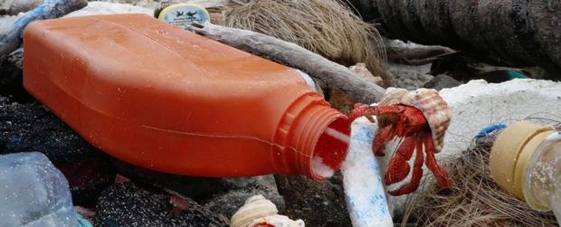 Thảm họa sinh thái: Nửa triệu sinh vật đã phải bỏ xác tại hòn đảo đang ngập trong hàng trăm triệu mảnh rác nhựa - Ảnh 7.