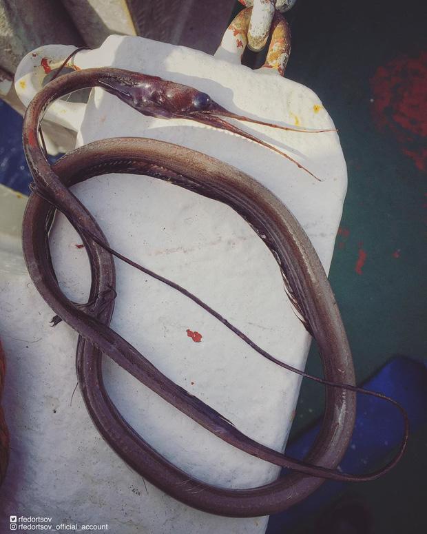 Bộ sưu tập những sinh vật kỳ dị dưới biển của anh ngư dân mỗi dịp căng buồm ra khơi mang về - Ảnh 7.