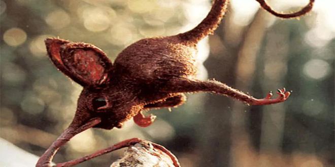 Nosewalkers - loài động vật kì lạ nhất Trái Đất, dù có chân nhưng lại dùng mũi để di chuyển - Ảnh 3.