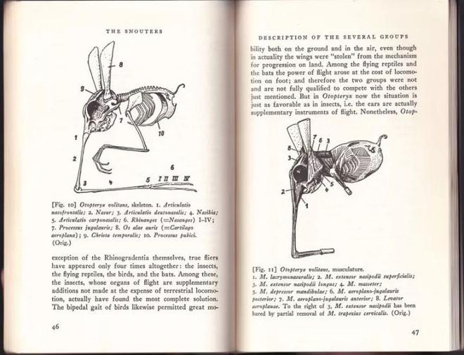 Nosewalkers - loài động vật kì lạ nhất Trái Đất, dù có chân nhưng lại dùng mũi để di chuyển - Ảnh 10.