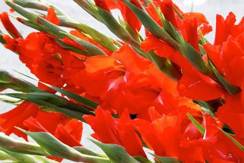 8 bước giữ hoa lay ơn tươi lâu trong những ngày Tết - Ảnh 2.